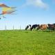 Dairy Farm Diversification