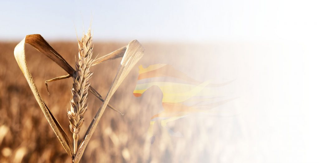 Flame Marketing | Agricultural Marketing Agency | Marketing Solutions