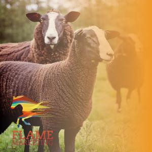 pet sheep farm diversification