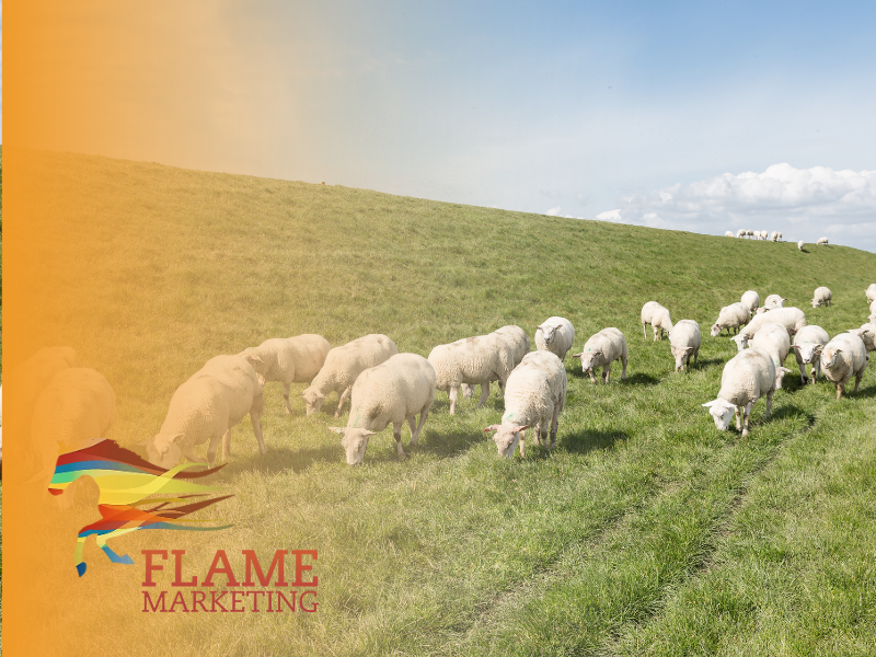lamb marketing