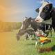 dairy diversification