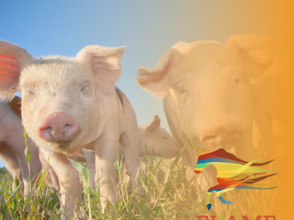 Pork Farming