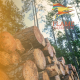 Flame Marketing | Niche Serice Landing Page | Wood pile logs